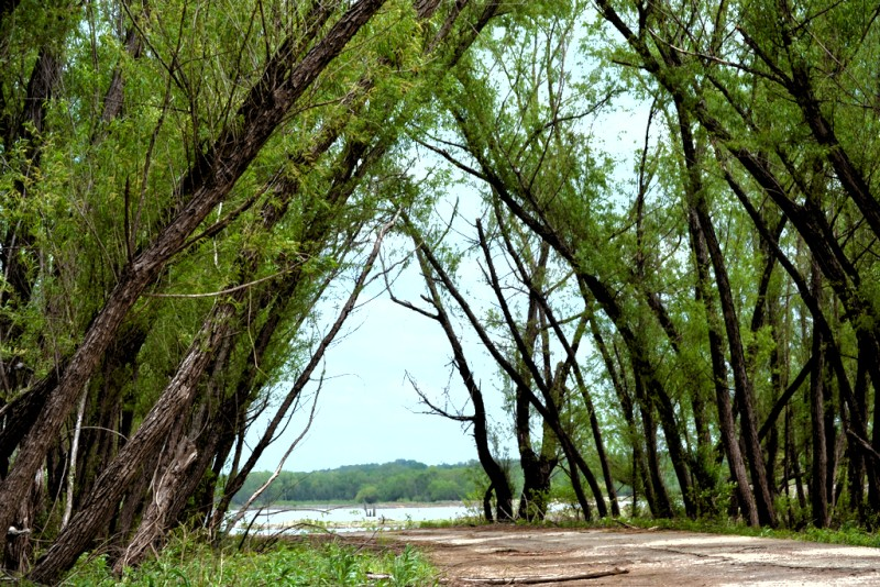 Gateway of trees to river access